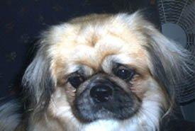 Happy Rescue Dog 100