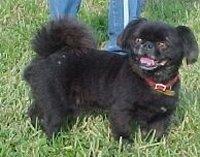Happy Rescue Dog 12