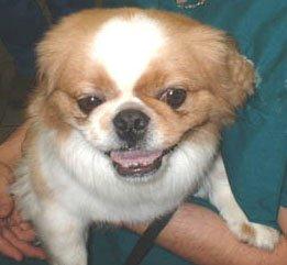 Happy Rescue Dog 16