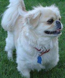 Happy Rescue Dog 18