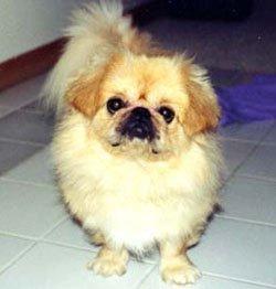 Happy Rescue Dog 23