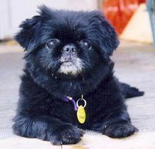 Happy Rescue Dog 25