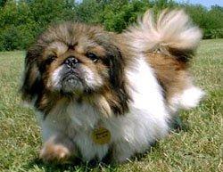 Happy Rescue Dog 26
