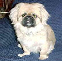 Happy Rescue Dog 29