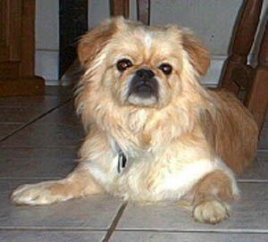 Happy Rescue Dog 31