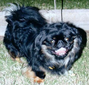 Happy Rescue Dog 38