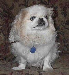 Happy Rescue Dog 40
