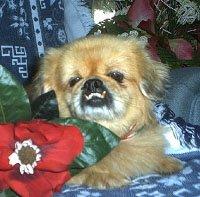Happy Rescue Dog 41