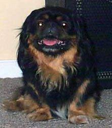 Happy Rescue Dog 44