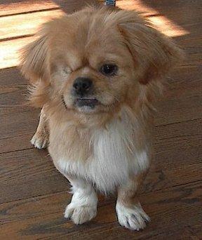 Happy Rescue Dog 50