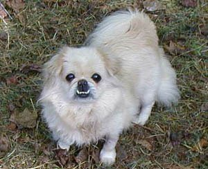 Happy Rescue Dog 54