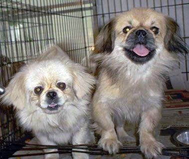 Happy Rescue Dog 59
