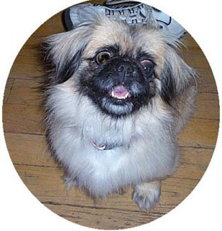 Happy Rescue Dog 60