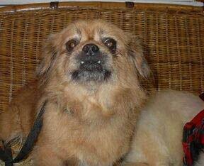 Happy Rescue Dog 63