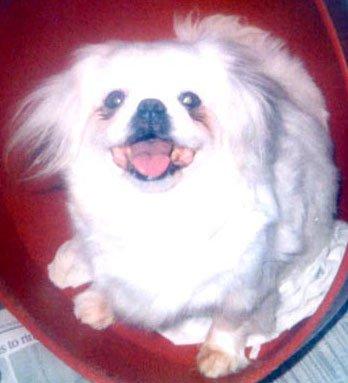 Happy Rescue Dog 65