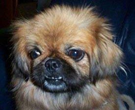 Happy Rescue Dog 66