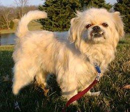 Happy Rescue Dog 67