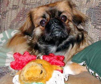 Happy Rescue Dog 77