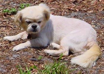 Happy Rescue Dog 82