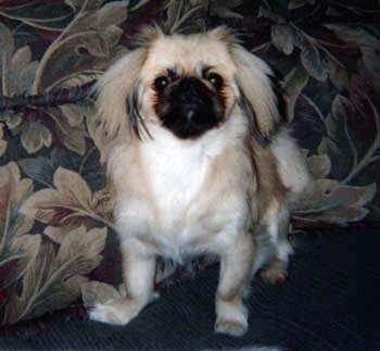 Happy Rescue Dog 88