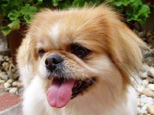 Happy Rescue Dog 89
