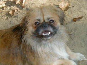Happy Rescue Dog 91