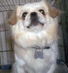 Happy Rescue Dog 95