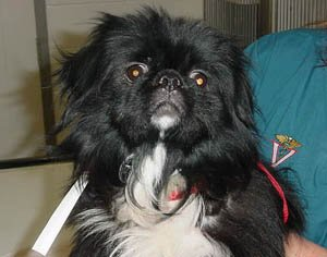 Happy Rescue Dog 99